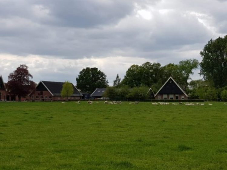 Project Koosveld Recreatiewoningen